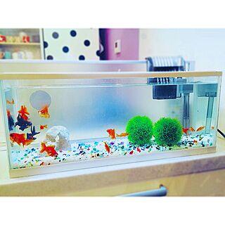 女性家族暮らし3LDK、金魚に関するpopさんの実例写真