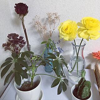 棚/みどりのある暮らし/観葉植物/花のある暮らし/ドライフラワーのある暮らし/ドライフラワー...などのインテリア実例 - 2019-02-22 21:48:53