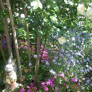 部屋全体/庭/実家の庭/ガーデン/ガーデニング...などのインテリア実例 - 2016-05-31 10:46:30