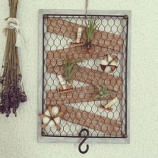 女性一人暮らし、On Walls エアプランツに関するsoraさんの実例写真