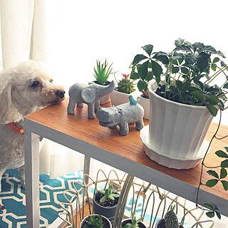 女性家族暮らし、リビングと犬の置物に関するJunran50さんの実例写真