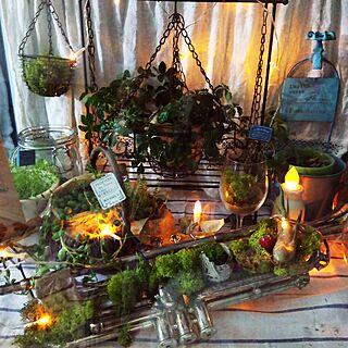 リビング/green/NO GREEN NO LIFE/多肉植物/観葉植物...などのインテリア実例 - 2016-04-29 23:54:42