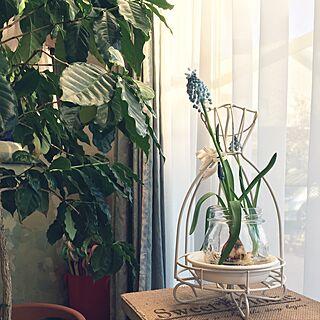 女性家族暮らし、植物 ドレス?に関するniconさんの実例写真