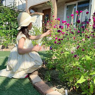 センニチコウ/子どもと楽しむ/夏/ゆるく生きる/夏の庭...などのインテリア実例 - 2020-08-29 09:09:53