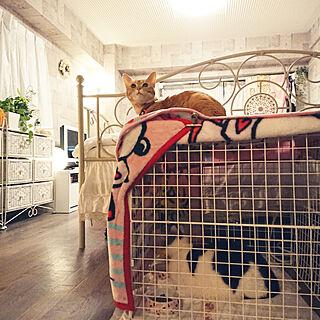 ベッド周り/ねこのいる日常/はちわれ猫/ねこのいる暮らし/ねこ...などのインテリア実例 - 2019-05-25 22:54:08