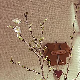 女性53歳の家族暮らし3LDK、啓翁桜に関するhiro_kyo_e320さんの実例写真