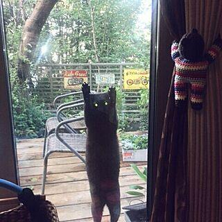 女性家族暮らし3LDK、勝手に猫部に関するayuさんの実例写真