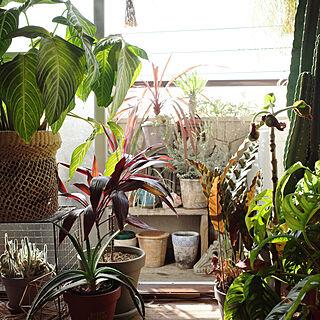 植物のある暮らし/グリーン/インドアグリーン/ミックスインテリア/一人暮らし...などのインテリア実例 - 2020-11-27 17:52:12