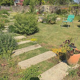 女性36歳の家族暮らし3LDK、芝生に関するTOROさんの実例写真