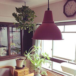 観葉植物/キッチン/IKEA/DIY/一人暮らし...などのインテリア実例 - 2015-08-13 12:58:22