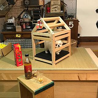 ベッド周り/犬小屋/ハブ酒/棟上げ/DIY...などのインテリア実例 - 2018-03-13 19:16:09