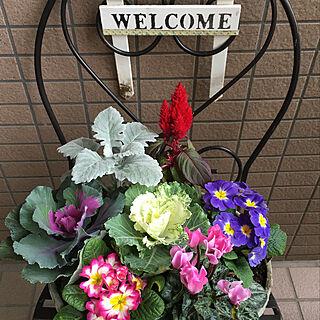 いつも見てくれてありがとう❤/玄関先に花/寄せ植え初心者/セリア♡/RCのみなさまに感謝❤...などのインテリア実例 - 2019-11-27 15:49:41
