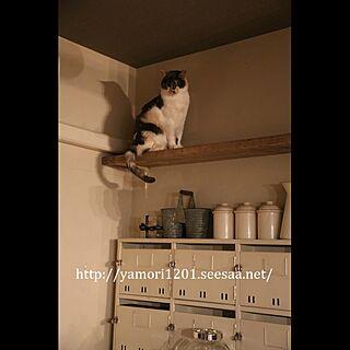 ねこ部/猫のいる日常/猫と暮らす/キッチン収納/収納棚...などのインテリア実例 - 2017-05-16 13:50:34