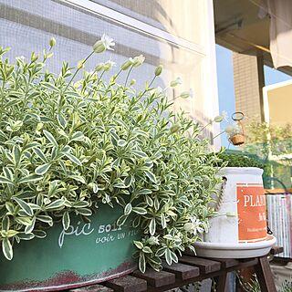 玄関/入り口/緑のある暮らし/花のある暮らし/植物/salut!...などのインテリア実例 - 2017-04-18 17:49:13