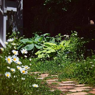 女性51歳の家族暮らし、庭のお花に関するyukiさんの実例写真