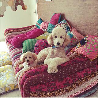 リビング/ソファ/カラフル/愛犬と暮らす/プードル...などのインテリア実例 - 2016-10-01 21:59:02