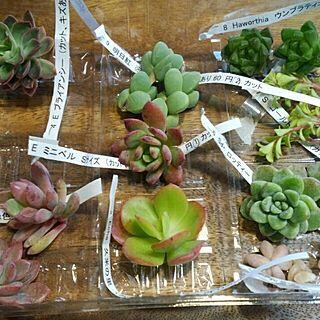 部屋全体/ネットショッピング/多肉植物のインテリア実例 - 2014-04-13 06:47:50