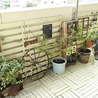 DIY棚の人気の写真(RoomNo.3027398)