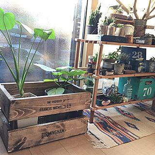 木箱/DIY/NO GREEN NO LIFE/モンステラ/ウンベラータ/流木...などのインテリア実例 - 2015-02-21 16:14:24