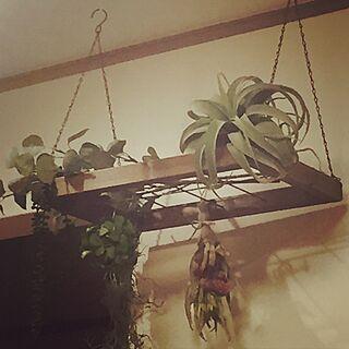 壁/天井/ニトリ/ドライフラワー/フェイクグリーン/観葉植物...などのインテリア実例 - 2017-06-02 23:24:03