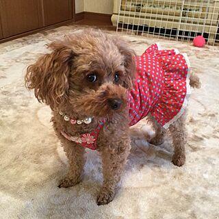 、犬洋服ハンドメイドに関するさんの実例写真