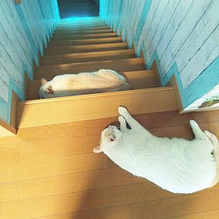 猫と暮らすの人気の写真(RoomNo.2886362)