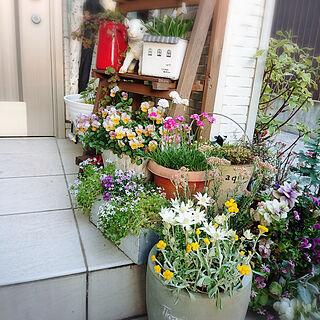 玄関/入り口/玄関前/寄せ植え/玄関前ガーデン/ビオラ...などのインテリア実例 - 2020-04-04 20:12:33