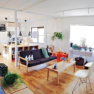男性家族暮らし1LDK、エアプランツの部屋に関するAtsushiさんの実例写真