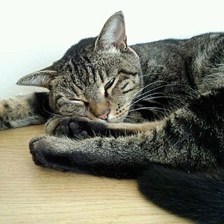 女性家族暮らし4LDK、猫ばかりでスミマセンに関するcoconana165さんの実例写真