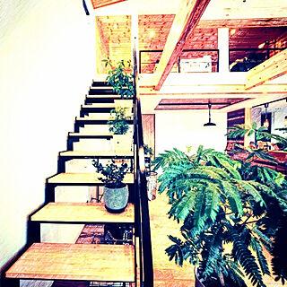 部屋全体/無垢材/暮らしを楽しむ/木のぬくもり/観葉植物...などのインテリア実例 - 2021-09-15 22:13:59