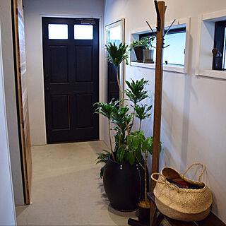 玄関/入り口/ドラセナコンパクタ/一軒家/植物モリモリにしたい/ボタニカル...などのインテリア実例 - 2017-11-16 11:23:57