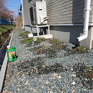 玄関/入り口/ガーデニング/植物のある暮らし/除草/アースガーデンのインテリア実例 - 2021-04-11 13:58:35