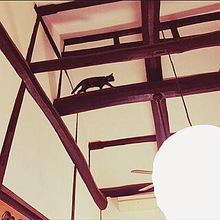壁/天井/猫のいる暮らし/鍼/リノベーション/古民家...などのインテリア実例 - 2018-01-16 23:41:06