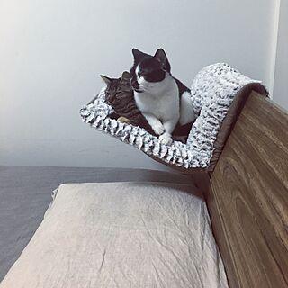 ベッド周り/猫ベッド/猫ハンモック/猫/ねこ...などのインテリア実例 - 2016-01-24 18:23:26