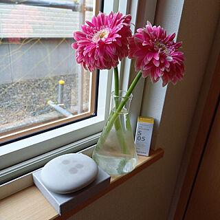 リビング/ガーベラ/植物のある暮らし/三角フラスコ/花を飾る暮らし...などのインテリア実例 - 2021-06-25 15:01:11