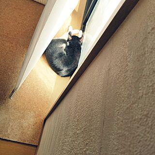 部屋全体/猫のいる日常/ねこ部/かじゅにゃ〜る/ねこと暮らす...などのインテリア実例 - 2017-03-20 15:06:26