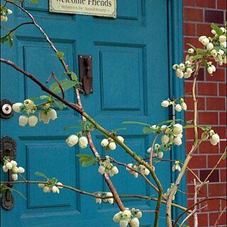 女性家族暮らし、ペイントしたドアに関するnanamamaさんの実例写真