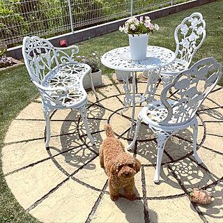 庭のある暮らし/愛犬と暮らす家/ガーデンテーブル&チェア/敷石/庭...などのインテリア実例 - 2021-04-28 10:50:06