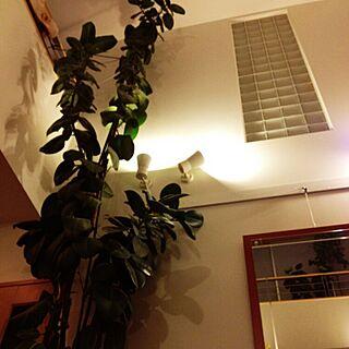部屋全体/インドアグリーン/越冬準備/モッサモサグリーン/ジャングル化が進むのインテリア実例 - 2015-11-20 19:12:48