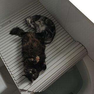女性39歳の家族暮らし2LDK、猫と暮らす工夫に関するmikomaruさんの実例写真