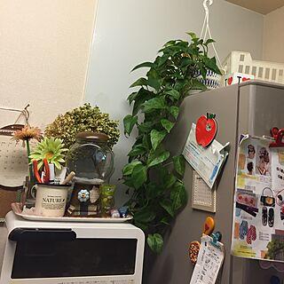 キッチン/今夜も徹夜/ビンテージ風/片付けないと。/観葉植物のある部屋...などのインテリア実例 - 2016-09-02 21:36:25