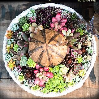 リメ缶/gardening/JUNK/Garden雑貨/JUNK GARDEN...などのインテリア実例 - 2018-11-26 20:00:38