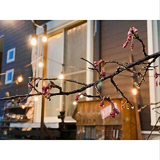 庭/枝垂れ桜/花のある暮らし/JUNK/手作りの庭...などのインテリア実例 - 2020-03-28 18:36:49