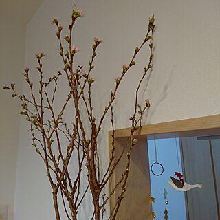 女性家族暮らし、桜咲くに関するm.kom0923さんの実例写真