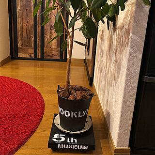 アイアンペイント/ステンシル/DIY/ダイソー/観葉植物...などのインテリア実例 - 2018-01-19 19:23:03