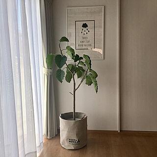 女性家族暮らし、多肉植物初心者に関するmegooさんの実例写真