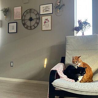 リビング/ウォールデコレーション/海外インテリアに憧れる/グレーの壁紙/猫のいる暮らし...などのインテリア実例 - 2021-02-17 02:12:49