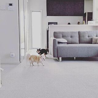 新生活/犬/モノトーン/白が好き/愛犬と暮らす家...などのインテリア実例 - 2021-02-19 20:43:52