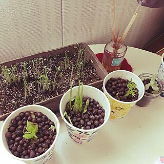 食べられない植物の人気の写真(RoomNo.2514259)