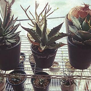 バス/トイレ/NO GREEN NO LIFE/植物コーナー/CAUDEX/日本家屋...などのインテリア実例 - 2018-02-17 16:48:58
